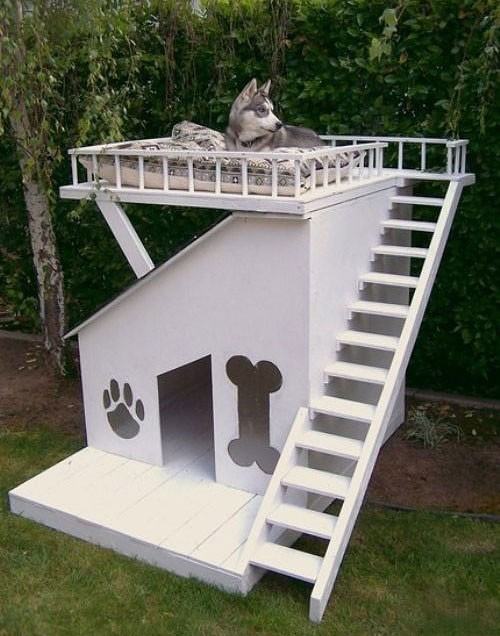 Luxury house for man's best friend.